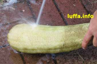 Spraying loofah with hose